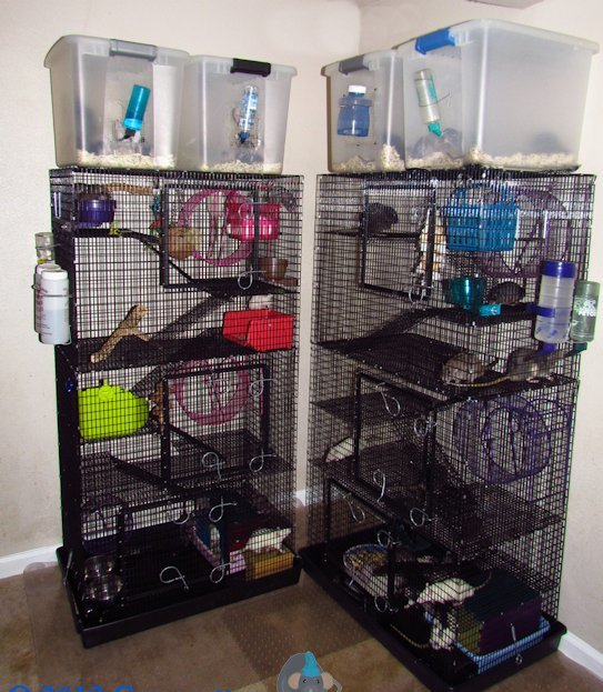 Martins Has Many Cages That You Can Choose From Go To Martinscages They Have Pictures Posted There So Need For Me Repeat Here