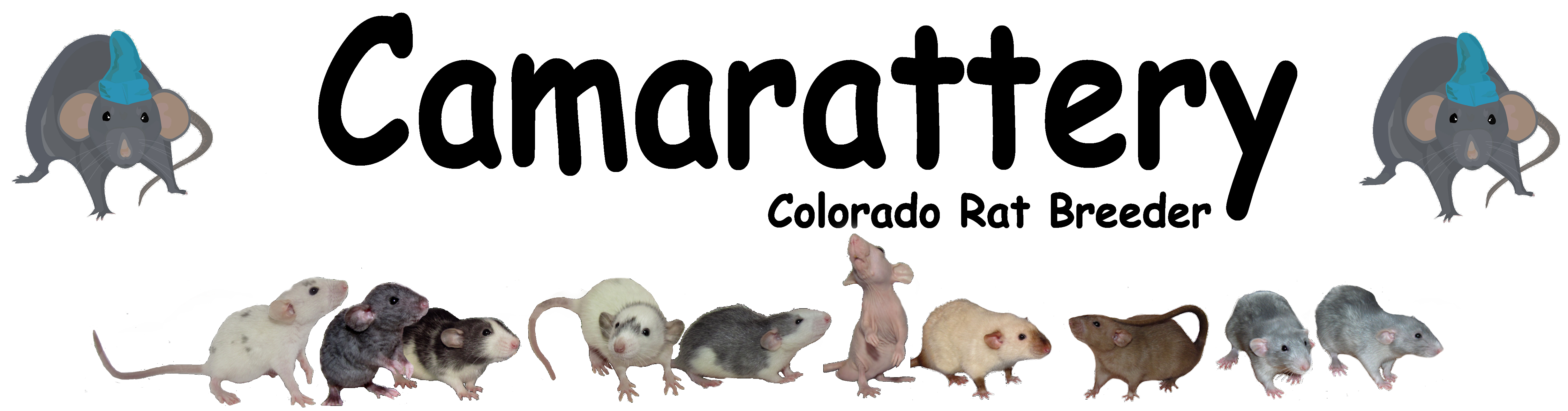 Camarattery - Colorado Rat Breeder